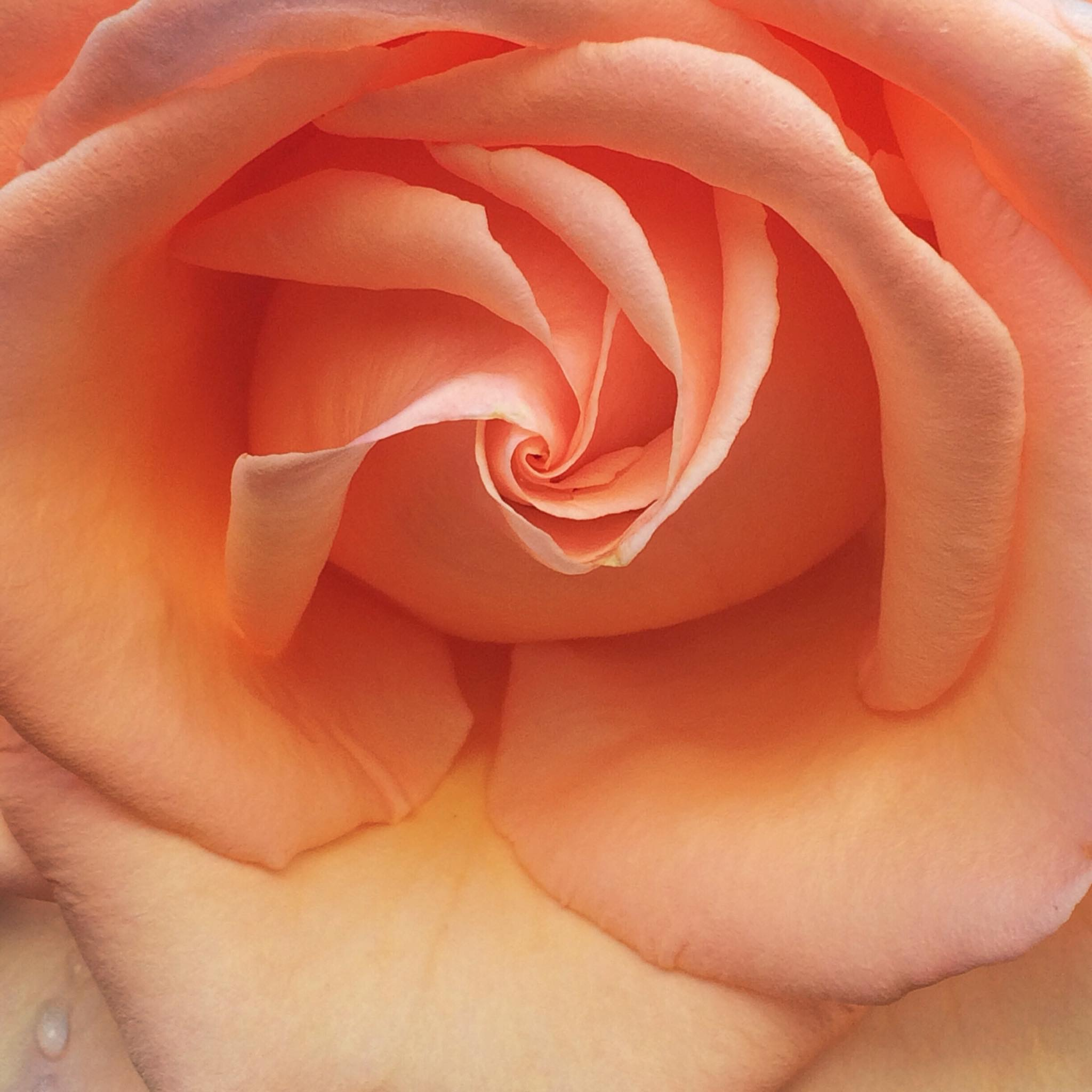 Rosehare Embodied Awakening